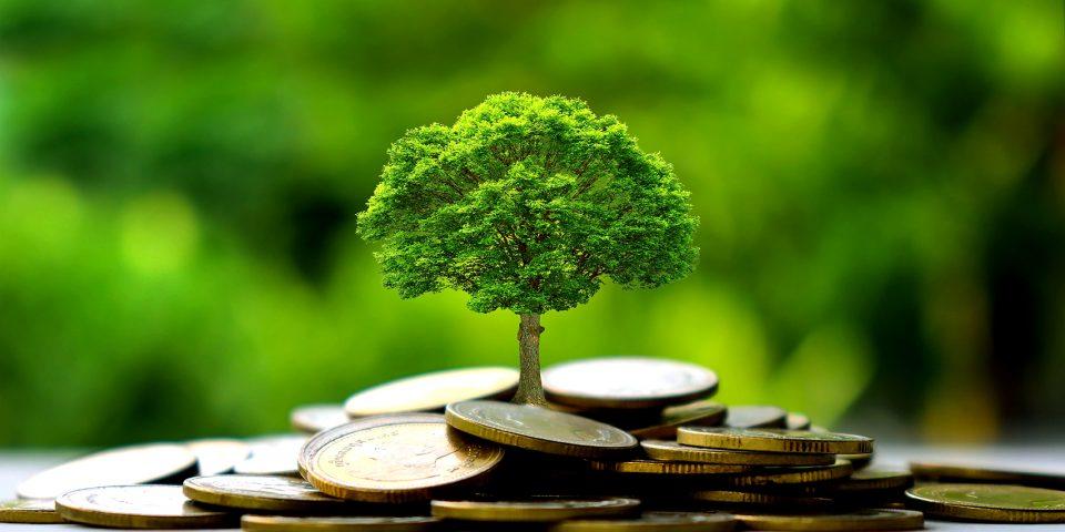 Kapital fürs Klima und Mut zum Markt!