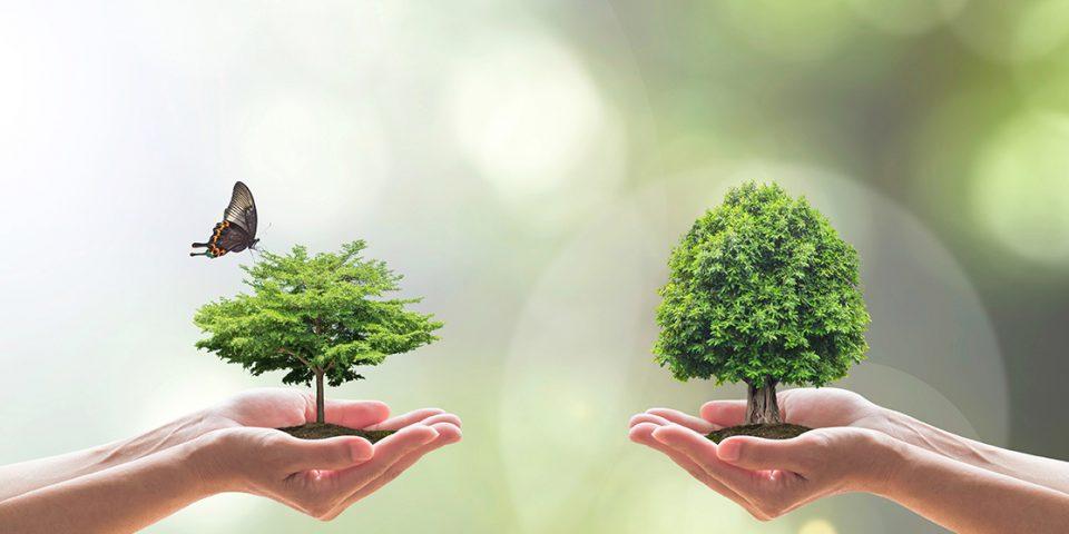 Umweltpolitik in der Sozialen Marktwirtschaft